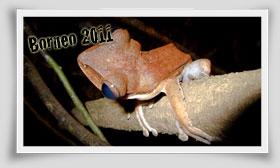 Borneo 2011